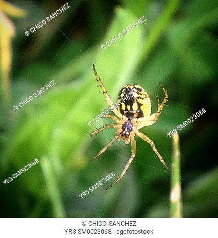 A spider on its web in Prado del Rey, Sierra de Cadiz, Andalusia, Spain
