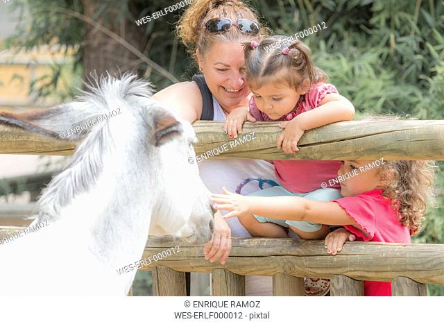 Woman with two little girls watching a donkey