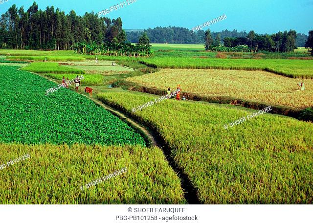 Beautiful landscape Bangladesh November 2008