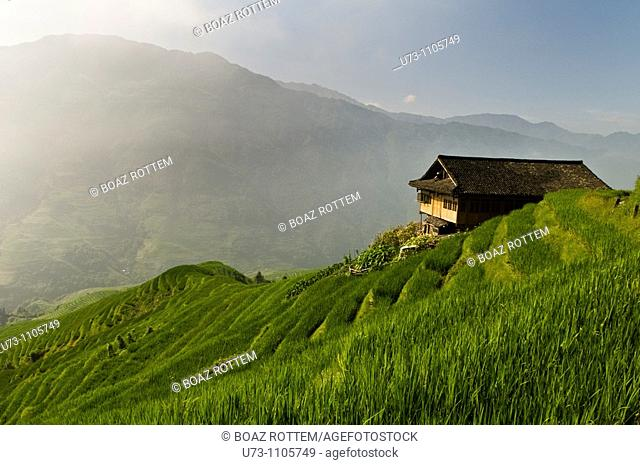 A lonely house in the middle of the green rice terraces of LongJi, Guangxi, China