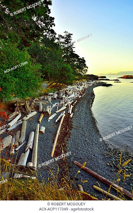A curved shore line with piles of driftwood at Pipers Lagoon park at Nanaimo Vancouver Island British Columbia, Canada