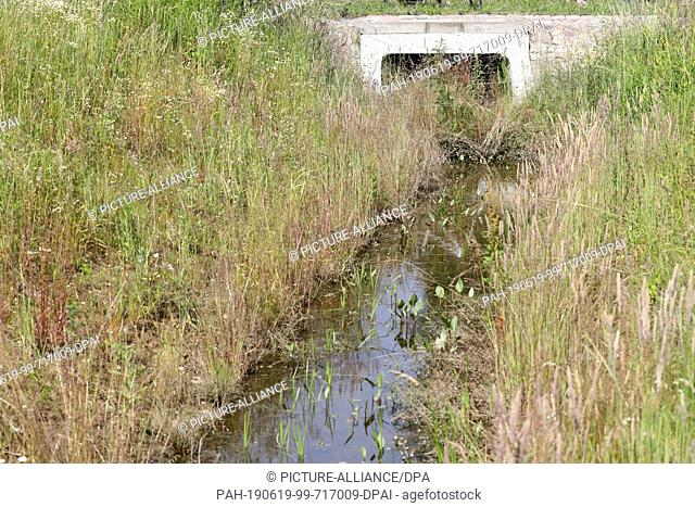18 June 2019, Mecklenburg-Western Pomerania, Rostock: The developed watercourse 2/8 in the district Evershagen, inlet to the Schmarler Bach