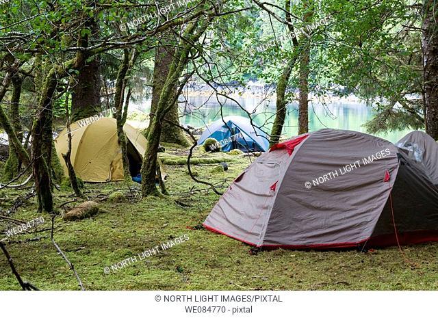 Canada, BC, Queen Charlotte Islands, Gwaii Haanas National Park.  Campsite in the rainforest