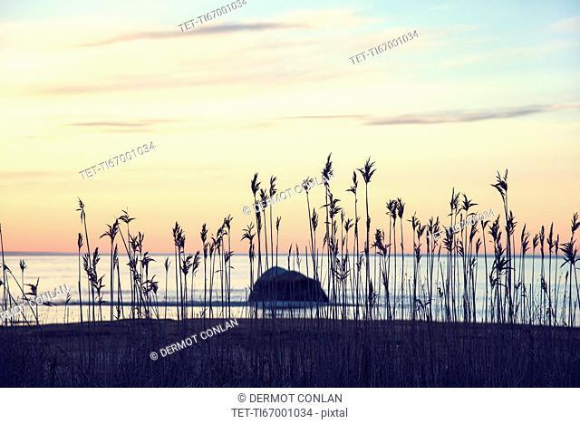 USA, Massachusetts, Cape Cod, Orleans, Marram grass at beach