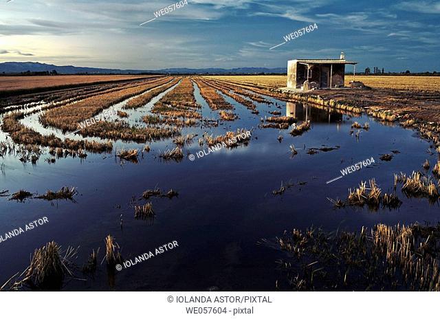 Rice fields after the harvest, (autumn). Ebro River delta. Tarragona province, Catalonia, Spain Después de la cosecha, en otoño