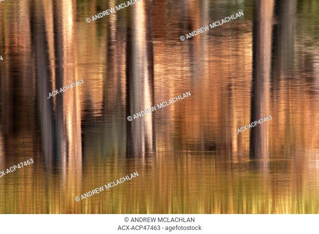 Impressionistic blur of spruce tree trunks reflecting in Raven Lake in Ontario's Halfway Lake Provincial park