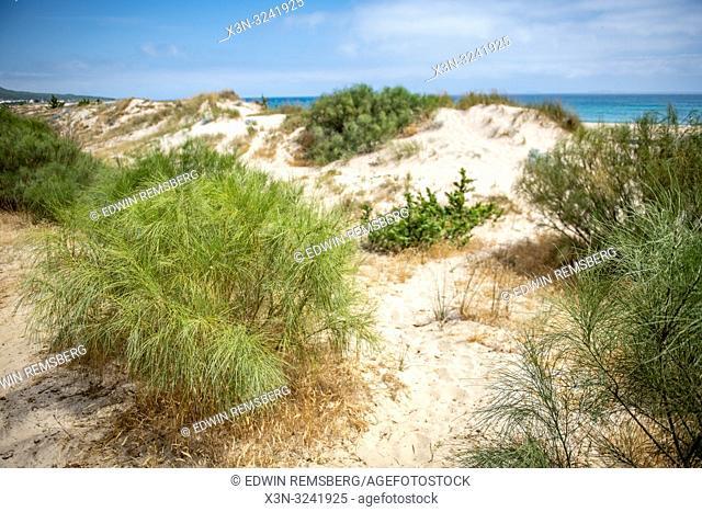 Plantlife Along Dunes, Tarifa, Cádiz, Andalusia, Spain