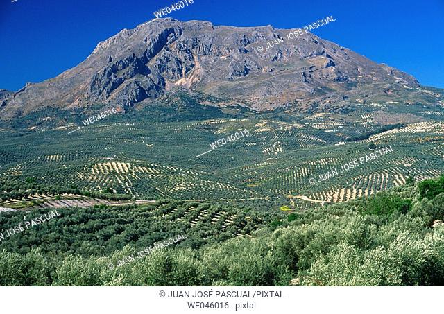 Monte Aznaitín and olive groves, Sierra Mágina. Jaén province, Andalusia, Spain