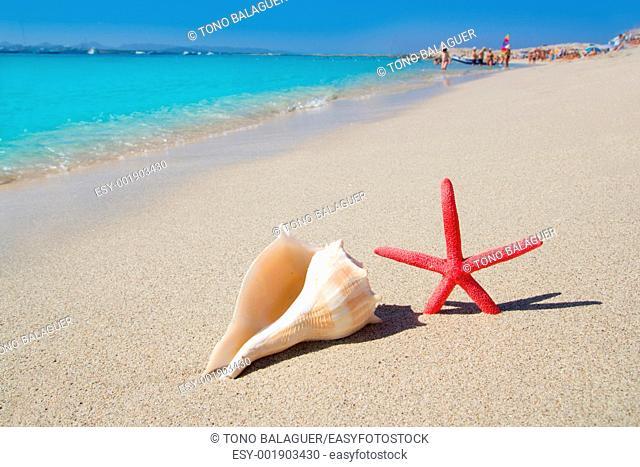 beach starfish and seashell in Formentera Illetes white sand
