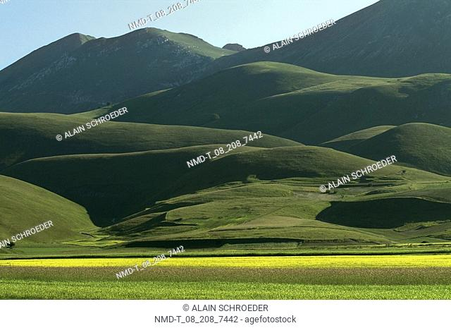 Crop in a field in front of a mountain range