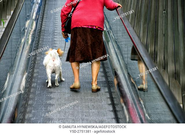 mature woman with dog on the leash on moving walkway connecting Old Town with the city, Vitoria-Gasteiz, Álava, Araba, Basque Country, Spain, Europe