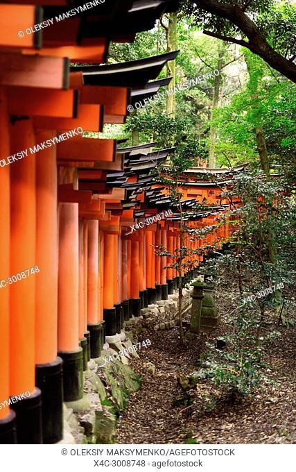 A long row of orange Torii gates at Fushimi Inari Taisha head shrine in Kyoto, Japan
