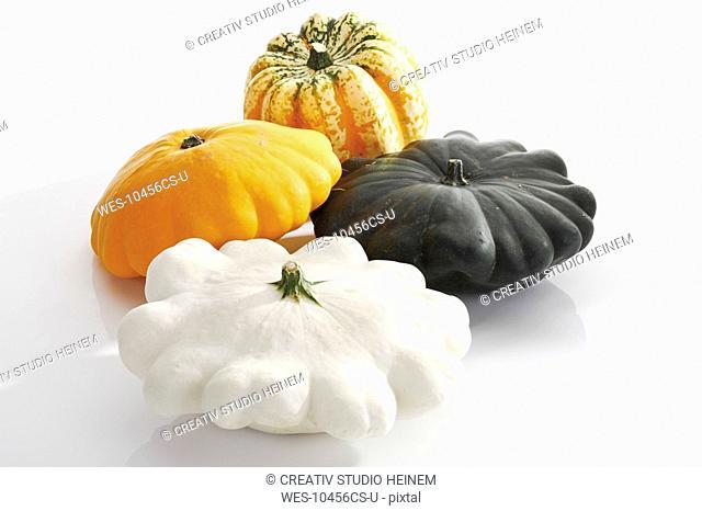 Festival-pumpkin Cucurbita pepo and Pattypan Squash