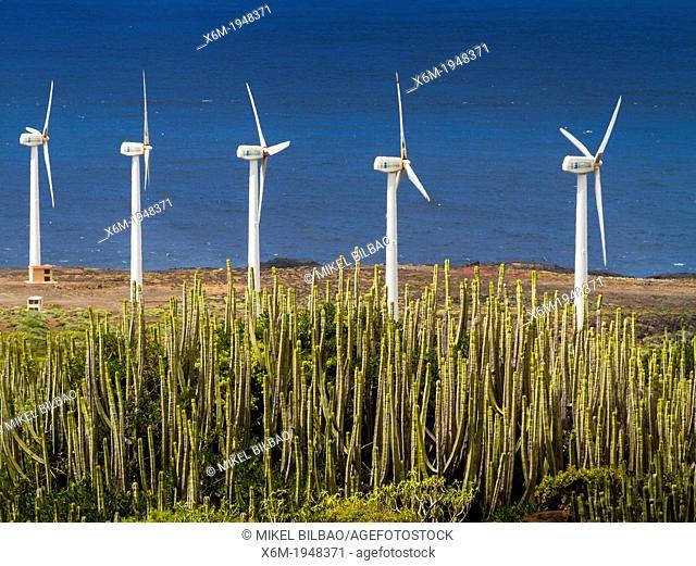 Canary Island spurge (Euphorbia canariensis) and wind turbines in Punta Teno. Tenerife, Canary Islands, Atlantic Ocean, Spain