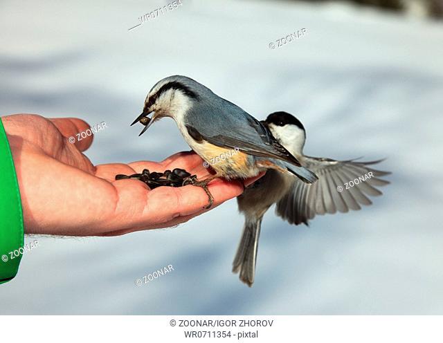 Birds on the hand