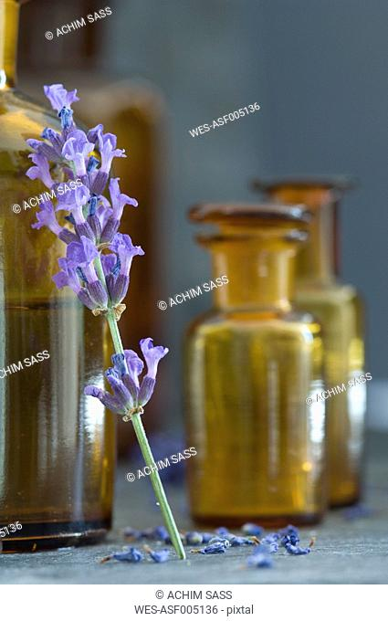 Twig of lavender leaning on brown glass bottle