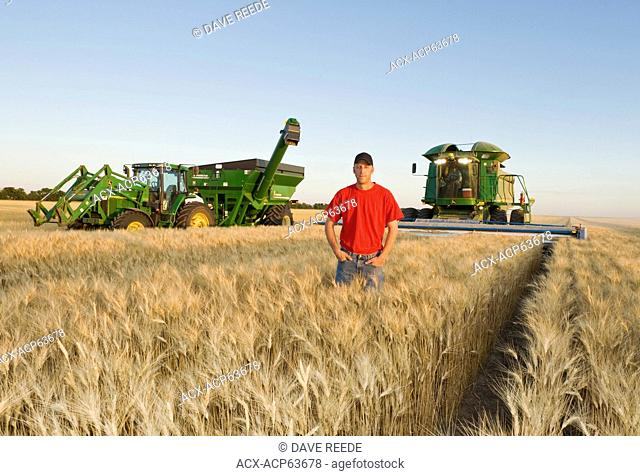 Young farmer in his mature durum wheat field during the harvest, grain wagon and combine in the background, near Ponteix, Saskatchewan, Canada