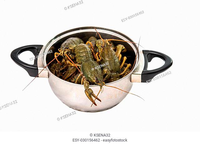 crayfish in a pot isolated on white background