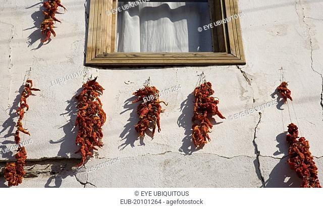 Red chilli peppers hung on strings to dry in summer sunshine around window frame of whitewashed house in the old town and casting shadow against the cracked...