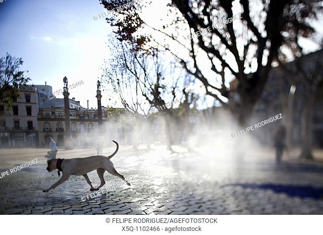 Dog by a fountain, Alameda de Hercules square, Seville, Spain  Tilted lens used for shallower depth of field