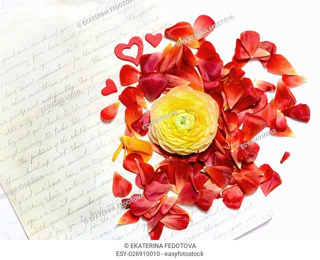 Ranunculus flowers background