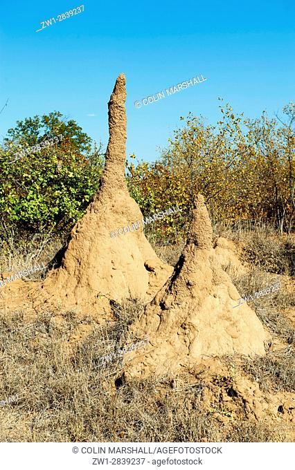 Pair of Termite hills, Kruger National Park, Transvaal, South Africa