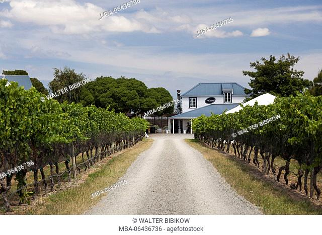 New Zealand, North Island, Martinborough, Wairapapa Region, vineyard