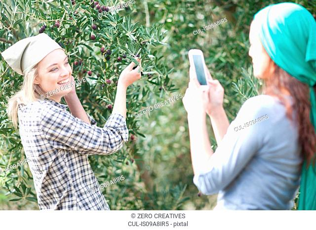 Woman taking photo of friend in olive grove