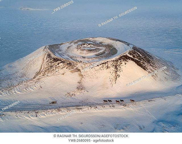 Top view of Icelandic horses in the wintertime by Skutustadagigar pseudo craters, Myvatn, Northern Iceland