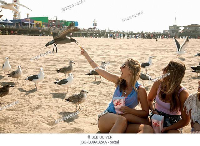 Three young women, sitting on beach, surrounded by seagulls