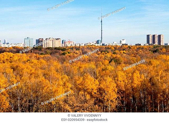 autumn skyline TV tower and yellow trees