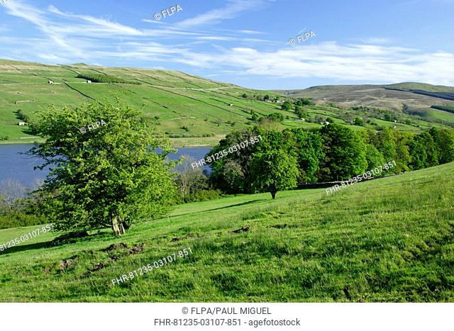 View of trees, lake and hills, Semerwater, Wensleydale, Yorkshire Dales N P , North Yorkshire, England, april