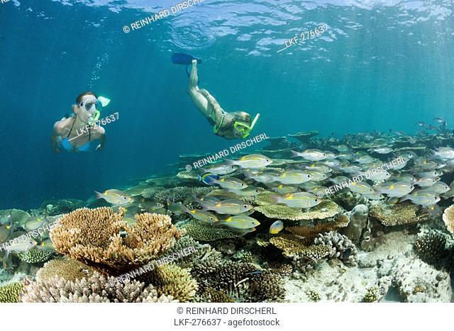 Two Women snorkel over Reef, Maldives, Ellaidhoo House Reef, North Ari Atoll