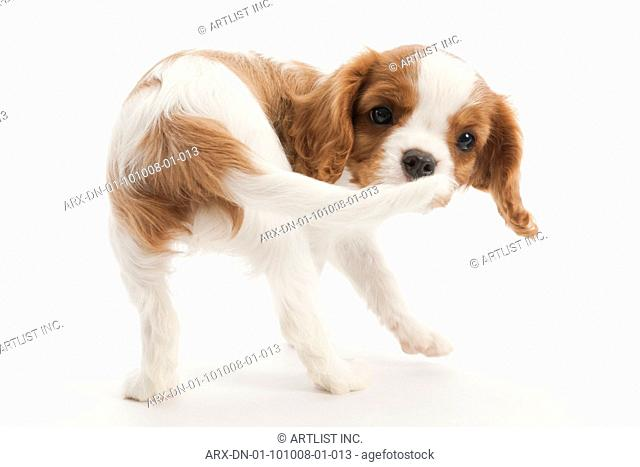 A puppy looking back