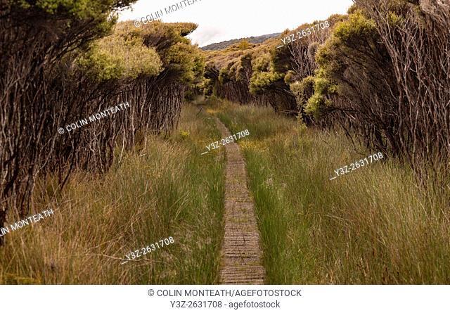 Boardwalk track through Makuka scrub, Mason Bay, Rakiura National Park, Stewart Island
