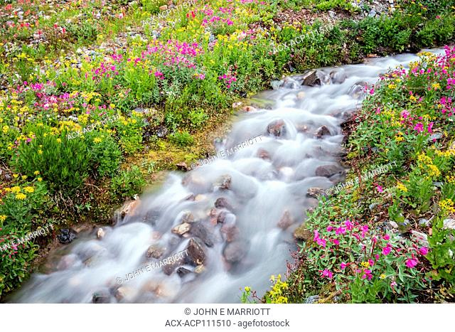 A gorgeous little alpine stream in a wildflower meadow in the Bugaboos, BC, Canada