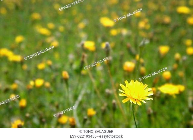 Close up wild flowers in the green meadow