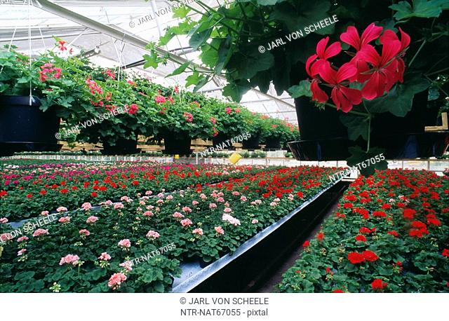 Flowers in green house