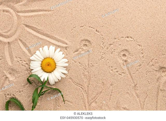 Painted sun and camomile prints on the sand. Beautiful picture. View from above