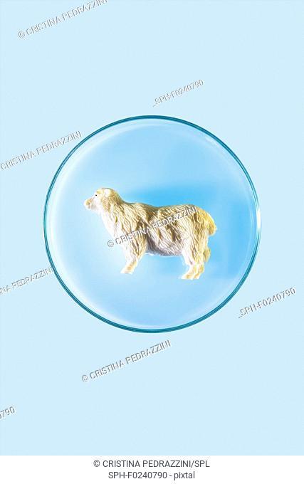 Plastic sheep in petri dish