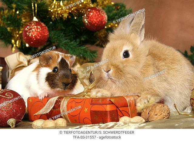 bunny and guinea pig