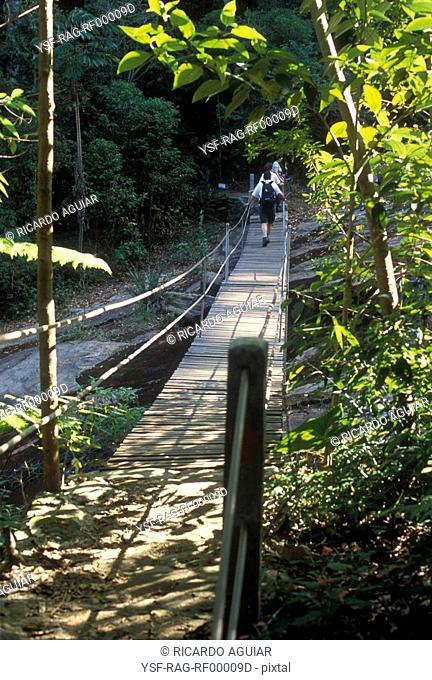 Tijuca Florest, Rio de Janeiro, Brazil