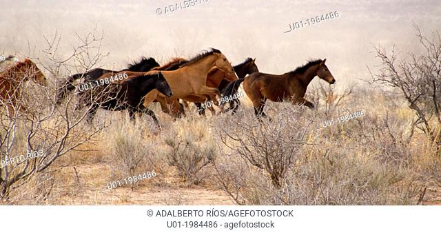Horses can live a free life wild or feral surviving without a problem