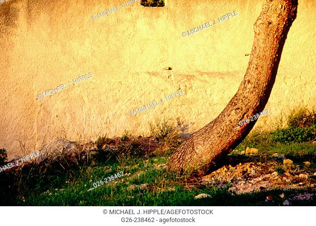 Tree and wall at sunset in Cassis. Provence. France