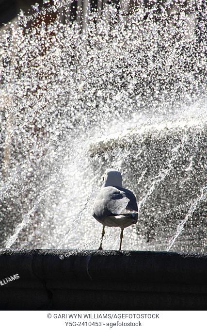 Seagull by Fontana delle Naiadi fountain in piazza della repubblica in rome italy