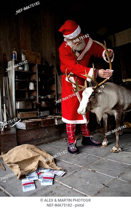 Santa Claus in a barn with a reindeer, Sweden