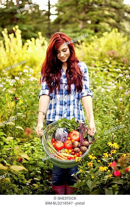 Gardener picking vegetables in garden