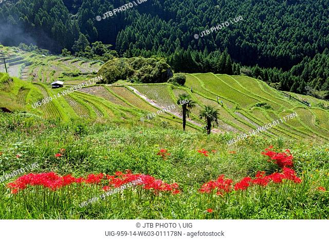 Field, Kumano, Mie, Kinki, Japan