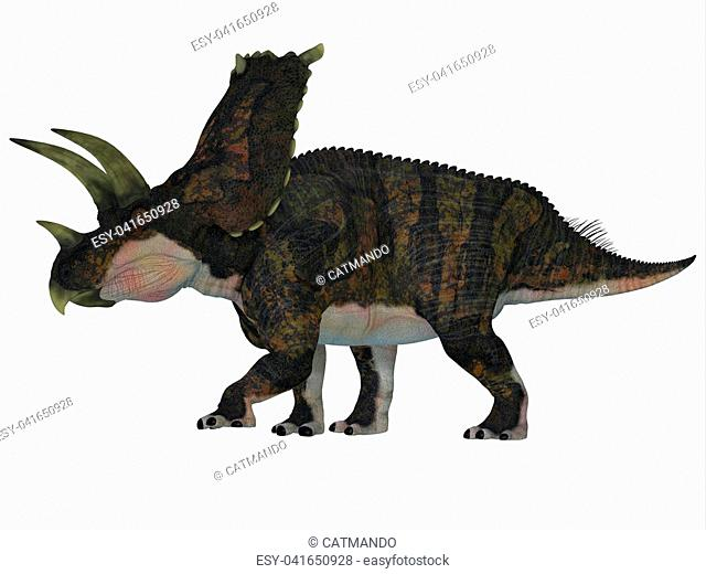 Bravoceratops was a herbivorous ceratopsian dinosaur that lived in Texas, USA in the Cretaceous period