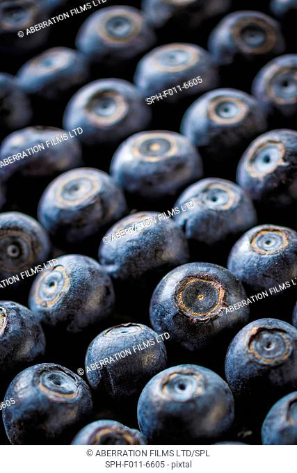 Blueberries, close up